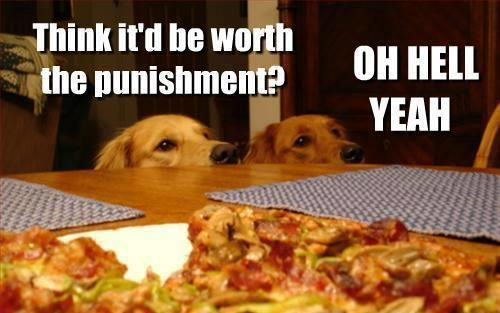 This is my two dogs for sure!