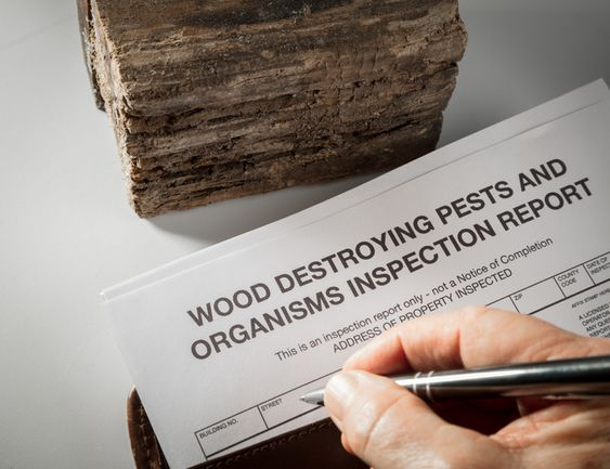 How To Conduct A Proper Termite Inspection It is not difficult for a layperson to inspect a home for termites when obvious signs are present. Unfortunately, mud tubes are often absent, making it very difficult to determine whether termites are present. It is even more difficult for a layperson to distinguish between old termite damage...