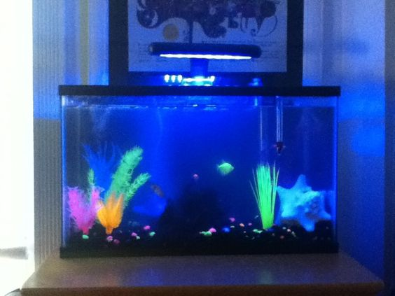 Glow in the dark glow fish gold fish and pink frog plus a for Glow in dark fish