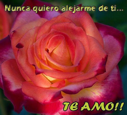 Te Amo Mi Amor Frases Con Rosas Y Corazones 1 2 Apk Te Amo Mi