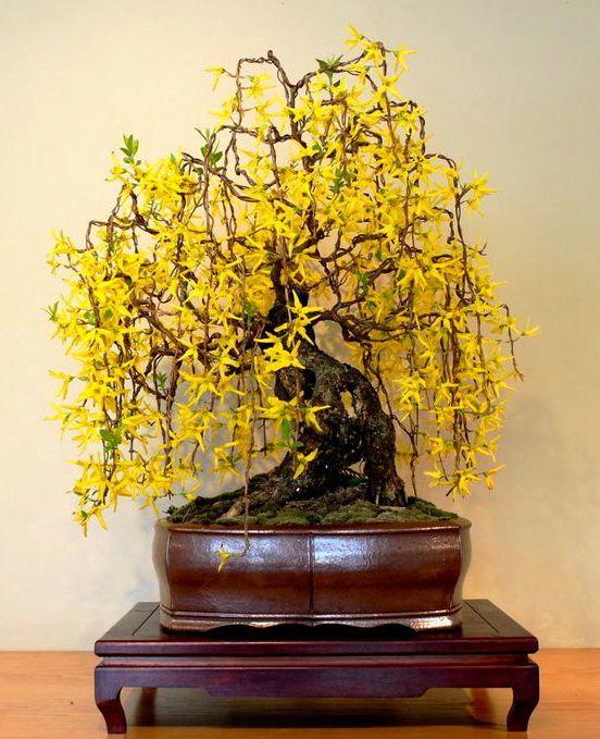 Vận chuyển những chậu cây cảnh bonsai