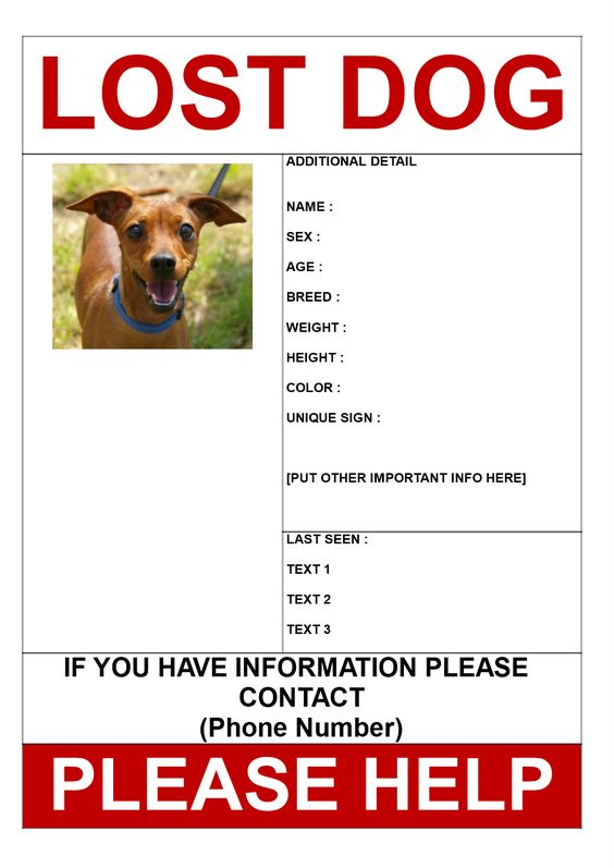 Find Missing Dog Poster Template   Find Missing Dog Poster   Lost Dog Flyer  Template Word