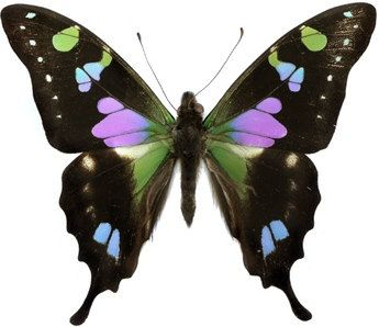 Real butterfly wings in bulk for crafting and art projects ...