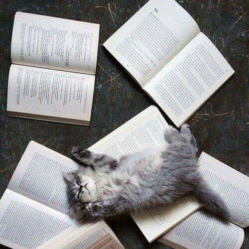 Maybe you've decided that No Interruptions Day should really be all about enjoying the charms of that new book you picked up but have yet to start reading? Great idea–just make sure those pages don't seem like a prime napping spot for your feline.
