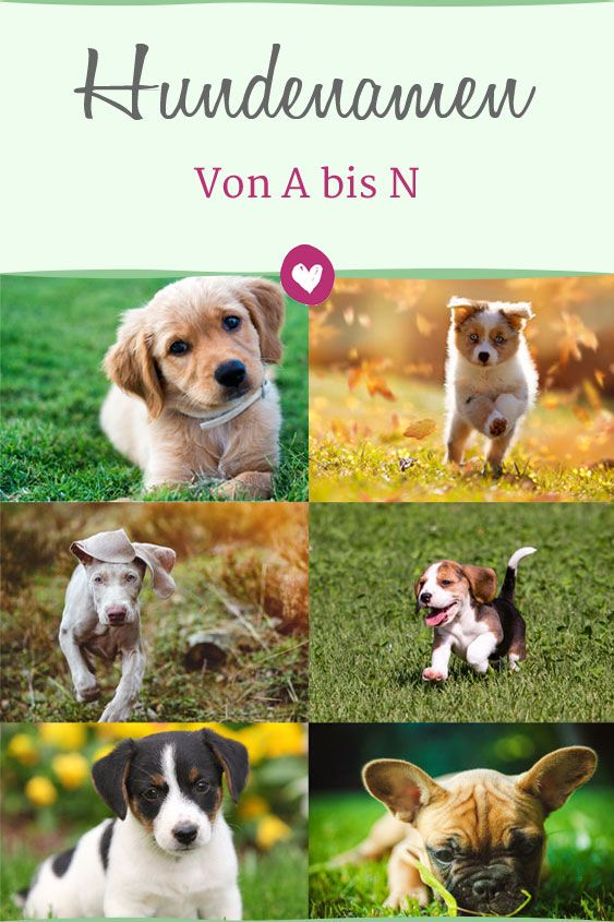 Beliebte Hundenamen Von A Bis N Liebenswert Hundenamen Hunde Namen Fur Hunde