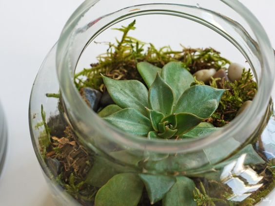 un terrarium de succulentes dans un bocal en verre. Black Bedroom Furniture Sets. Home Design Ideas