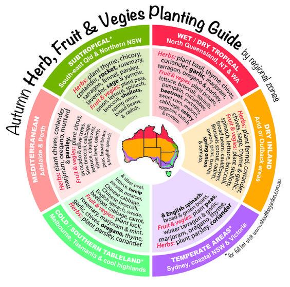 Autumn Herb Fruit Vegies Planting Guide By Regional 400 x 300