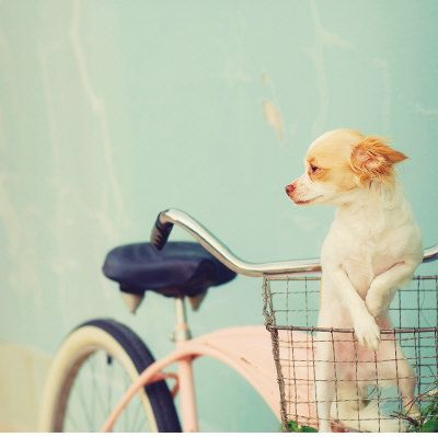 I really want to get a basket for my bike so this can be Carmella!