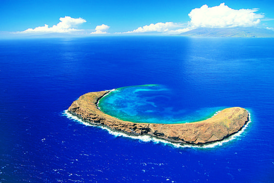 Molokini reef; one of the best snorkeling spots in Hawai'i!