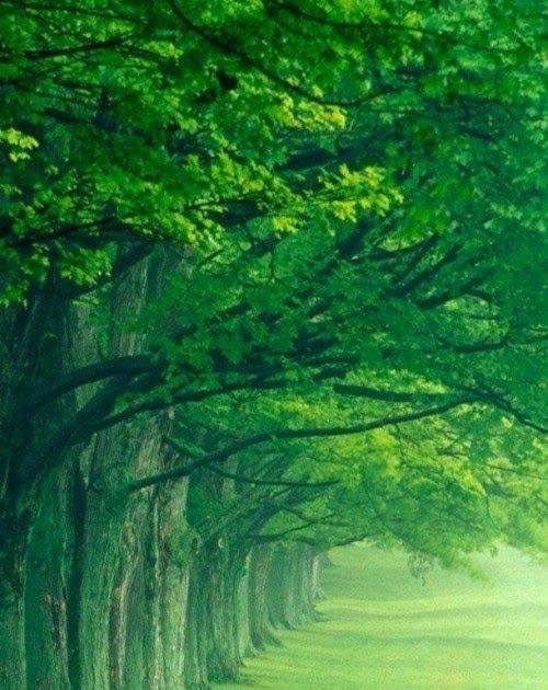 Desktop Wallpapers Free Download Hd Fullscreen Wallpapers Images Hdpixelstalk Com Beautiful Scenery Wallpaper Scenery Wallpaper Tree Photography