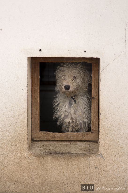 Miejskie Schronisko dla Bezdomnych Zwierząt Kundelek w Rzeszowie