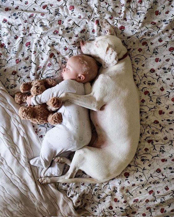 bébé avec un chien