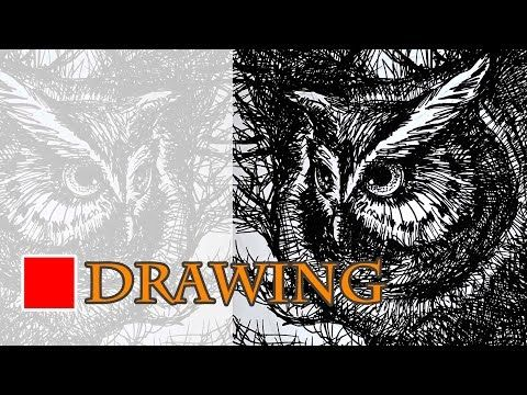 Cara Menggambar Burung Hantu Youtube Drawings