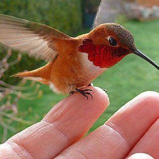 Humming bird. This bird is remarkable. While it would be cool to own a pair…