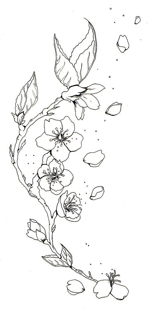 Cherry Blossom Sketch Tattoos Cherry Blossom Tattoo B W Blossom Tattoo Cherry Blossom Tattoo Cherry Blossom Drawing