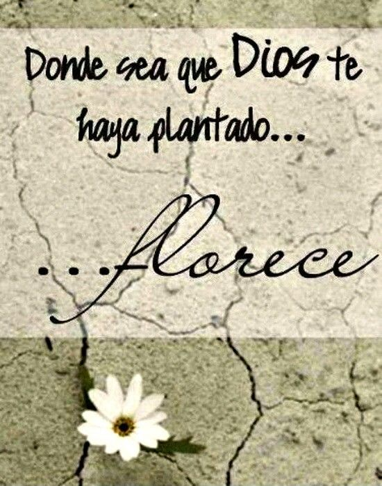 Florece