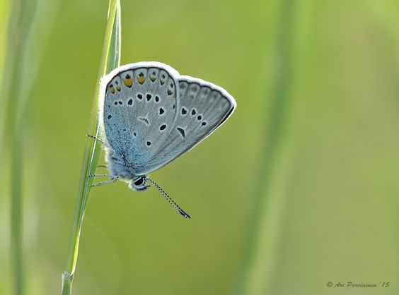 Amanda's Blue by Ari Parviainen - Photo 142946537 - 500px