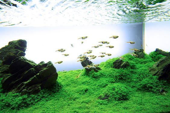 IAPLC 2011 #80 - Green Aqua | Flickr - Photo Sharing!