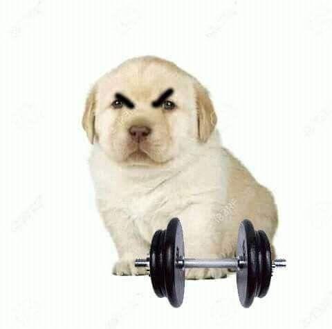 El Perrito Enojado Fitness Perro Enojado Memes Perros Perros Tristes