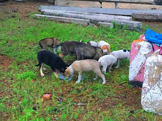 Голодные щенки на СибВО. Фото Evgenia Shveda