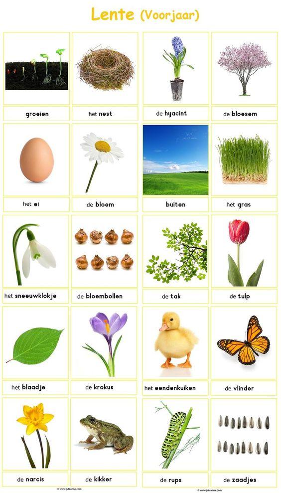 Woordkaarten : lente (voorjaar)