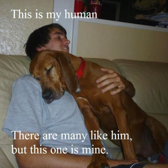 Tears...just....tears: Sweet, Best Friends, Puppy Love, Mans Best Friend, Dog S, Bestfriend, Love My Dog, Man S, Adorable Animal