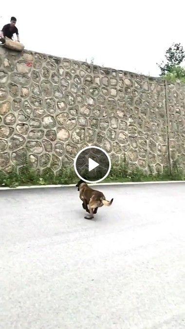 Eu acho que nenhum obstaculo pode parar esse cão