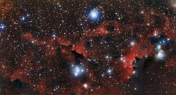 De vleugels van de Zeemeeuwnevel.   Deze foto toont de ingewikkelde structuur van een gedeelte van de Zeemeeuwnevel dat officieel IC 2177 heet. Deze slierten gas en stof staan bekend as Sharpless 2-296 (officieel Sh-2-296) en maken deel uit van de 'vleugels' van de hemelse vogel. Dit hemelgebied is een fascinerende wirwar van intrigerende hemelobjecten – een mengsel van donkere en roodgloeiende wolken die tussen heldere sterren door kronkelen. Credit: ESO