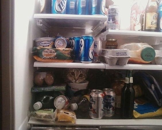 In solitude that we must provide food and drink to sustain ourselves … | Cats Are Everywhere