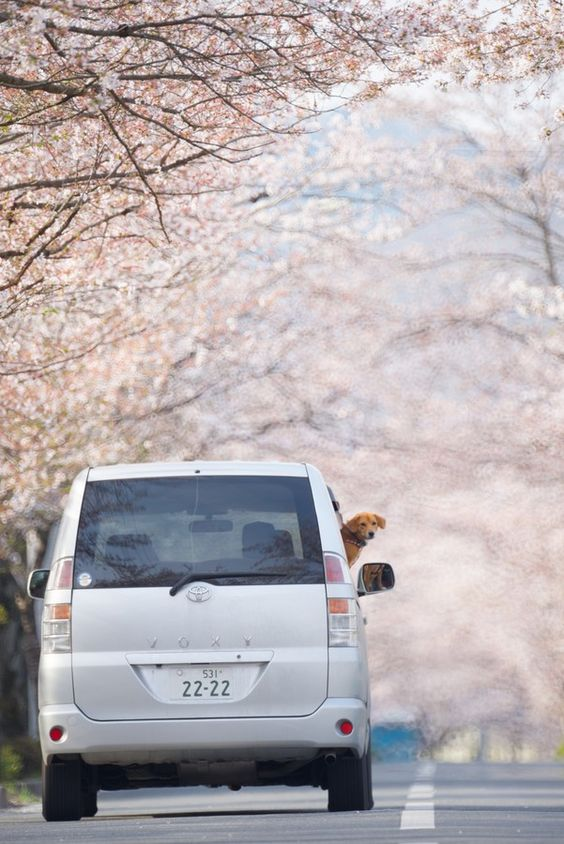 life goes on by Tedd Okano on 500px