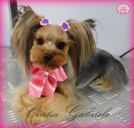 Korean Dog Grooming Style - Model: Yorkshire Taty | VIP
