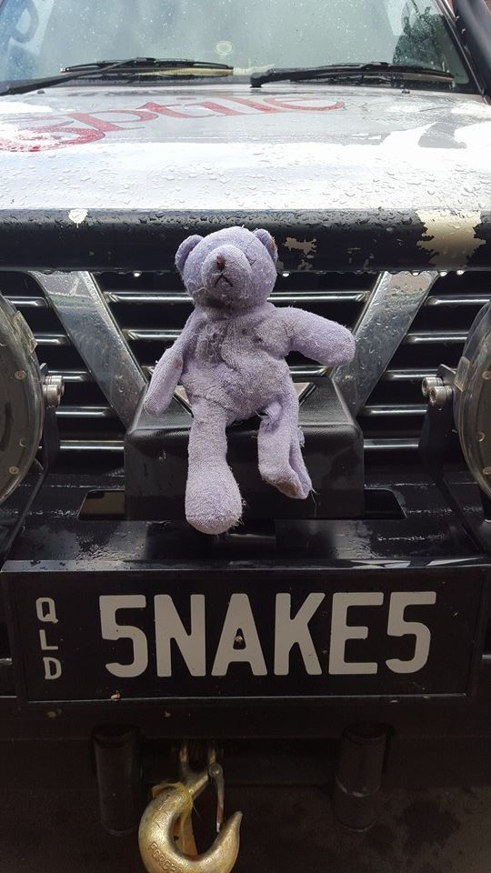 Vets Successfully Save A Teddy Bear — And The Snake Who Ate Him
