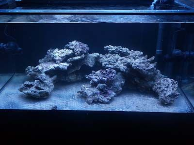 Aquascaping reef google search nano reef tank for Landscaping rocks for aquarium