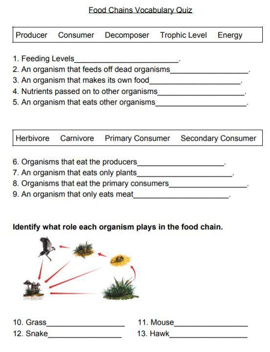 Food Chains Vocabulary Quiz Mehr Lernen Earth Science Lessons And Activities Food Chain Vocabulary Quiz Earth Science Lessons Food chain worksheet 1st grade