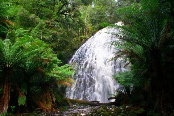 Tarkine Falls #Tasmania #Australia © Nicole Anderson | The Tarkine Wilderness is threatened. Protest on Pinterest: pinterest.com/tarkine #SaveTarkine