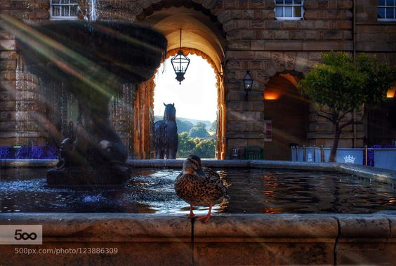 Fountain with Duck by GordonTweedale #fadighanemmd