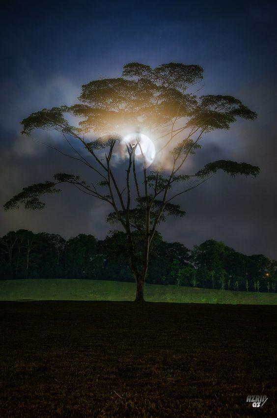 Moonshine Tree, by Azrin Az.