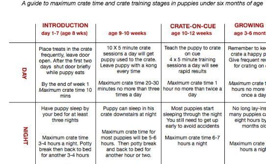 Age Appropriate Exercise Poster In 2020 Crate Training Puppy Schedule Puppy Training Schedule Crate Training Puppy