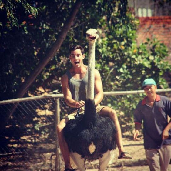 Either they're both extremely happy or the ostrich is thinking it's being attack by  a ravenous animal...