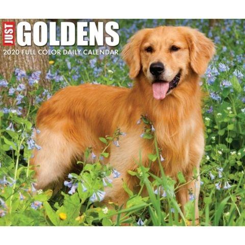 Just Goldens 2020 Calendar Everyone Loves The Golden Retriever