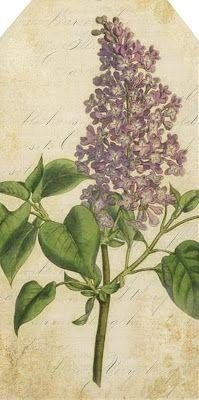 lilac ~ free vintage printable