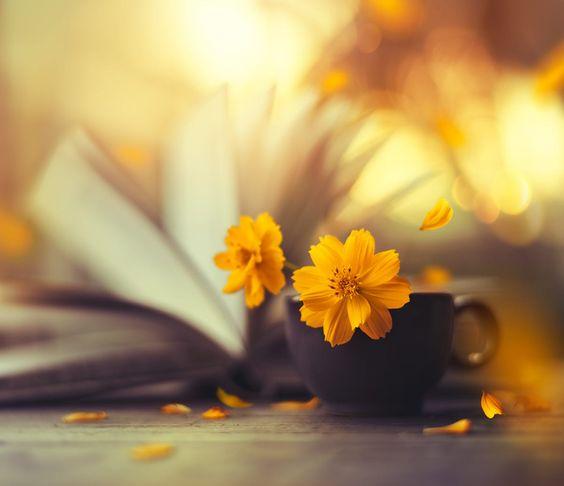 ดอกไม้สีเหลืองสวยๆ