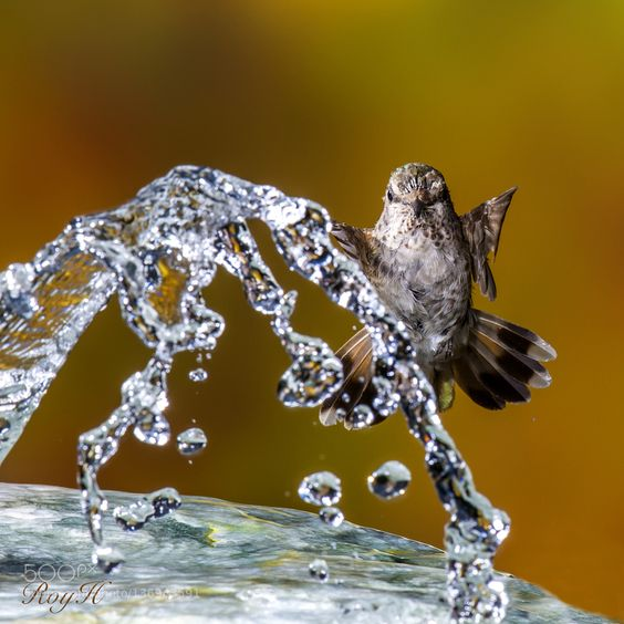 #animals REFRESHING by Roy-Hancliff http://ift.tt/1QnEYH3