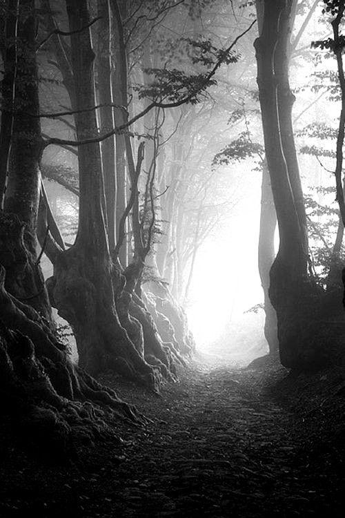 Follow My Pinterest Rckeyru Rckeyru Rckey Rckeypn Black And White Tree Black And White Landscape Black And White Photography