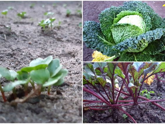 Der Garten Im Herbst ? Was Kann Man Noch Pflanzen? Garten Im Herbst Tipps Ideen