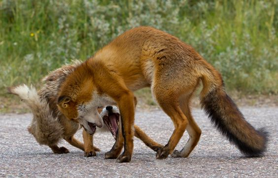 Round One by Menno Schaefer on 500px