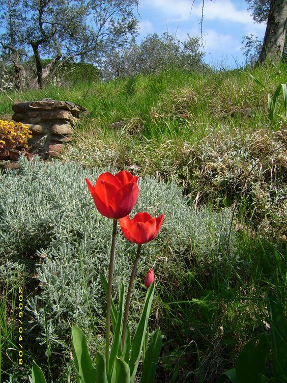 spring in Castagneto Carducci gg