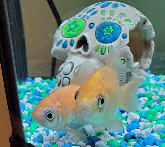fishy being a cute fishy