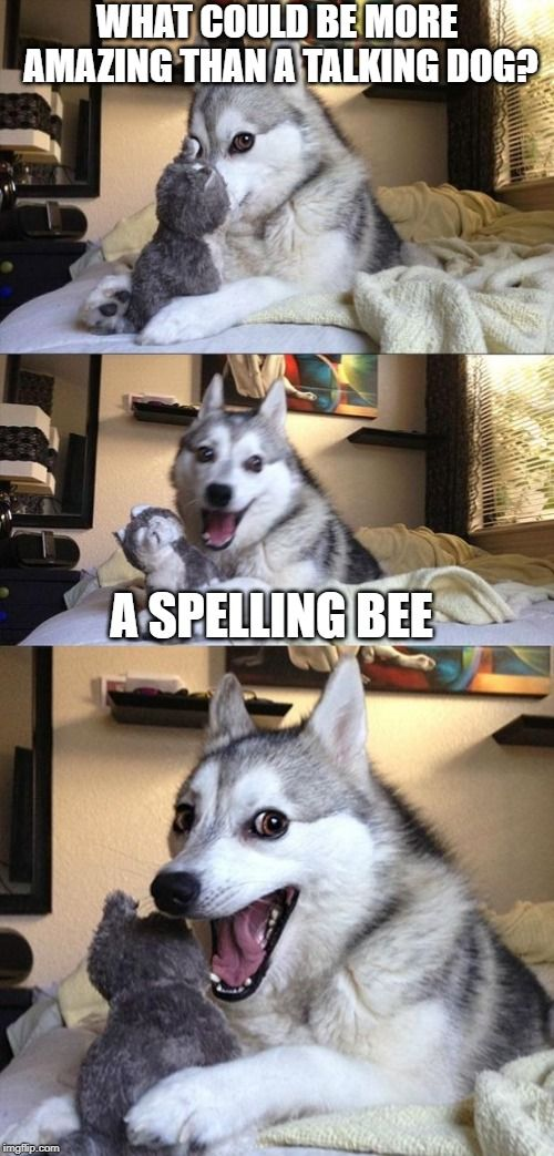 Have You Ever Come Across A Talking Dog Or A Spelling Bee