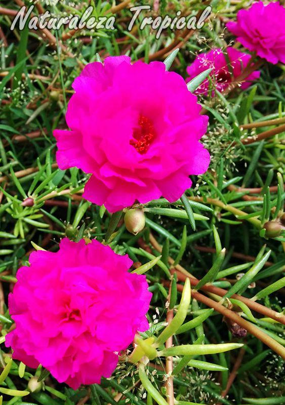 Quieres un jard n florido todo el a o apunta estas plantas - Plantas exteriores todo el ano ...